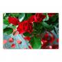 Aimant pour réfrigérateur - un bouquet de roses