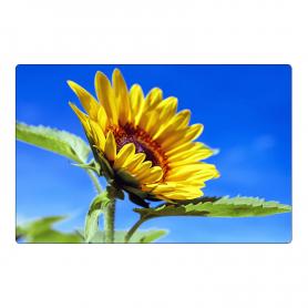 Fridge magnet - sunflower