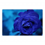 Fridge magnet - navy blue rose